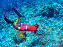 Snorkeling man dives to sea bottom. Young coral reef in deep blue water Stock Photo