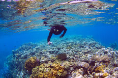 Snorkeling. Man snorkeling at the Great Barrier Reef Royalty Free Stock Photography