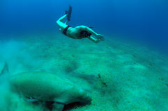 Snorkeling man and manatee Stock Photos