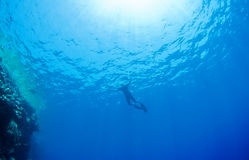 Snorkeling man, water and sun rays. Stock Images