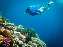 Snorkeling in Marsa Alam, Egypt. Coral reef