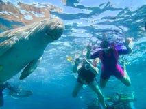 Snorkeling in Marsa Alam, Egypt. Dugong Dugon