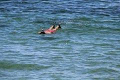 Maui snorkling ocean man Stock Photos