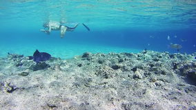 Snorkeling near a Coral Reef in the Red Sea. Beautiful Colorful Tropical Fish on Vibrant Coral Reefs Underwater in the Red Sea. Egypt. Sealife in the Red Sea stock video footage