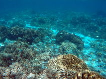 Snorkeling near tropical island - underwater view with sea bottom sand and coral reef Stock Photos