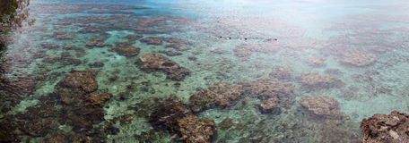 Snorkeling In New Caledonia Royalty Free Stock Photos
