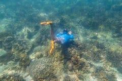 Snorkeling nurek zdjęcia royalty free