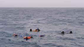 Snorkeling in the open sea. People with masks with tubes, lifebuoys are swimming in the Red Sea. Egypt. Excursion on a tourist boat stock video