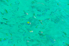 Snorkeling in the open sea. On a sunny day Royalty Free Stock Photos