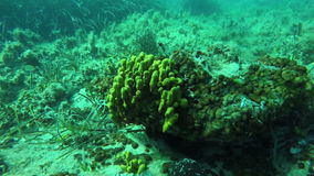 Snorkeling over sea bottom stock video