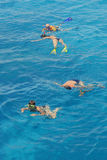 Snorkeling in pairs Royalty Free Stock Image