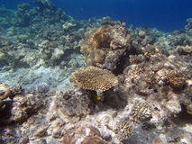 Snorkeling in the red sea. Hurghada 2013 Stock Image