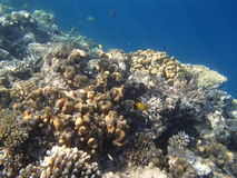 Snorkeling in the red sea. Hurghada 2013 Stock Images