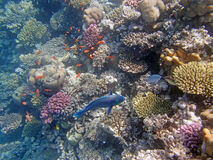 Snorkeling in the red sea Stock Photo
