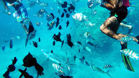 Snorkeling in the Red Sea near coral reefs Stock Image