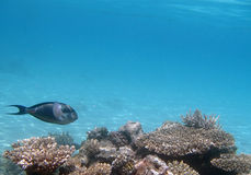 Snorkeling in the red sea. Near Hurghada 2013 Stock Photography