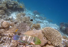 Snorkeling in the red sea. Near Hurghada 2013 Stock Photos