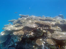 Snorkeling in the red sea. Near hurghada Royalty Free Stock Photos