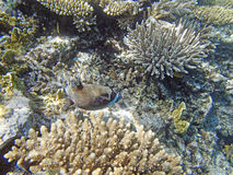 Snorkeling in the red sea. Near hurghada Stock Photo