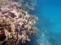 Snorkeling in the red sea. Near hurghada Stock Images