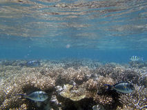 Snorkeling in the red sea. Near hurghada Stock Photography