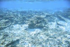 snorkeling Schitterende mening van onderwaterwereld Dode koraalriffen, overzees gras, wit zand en turkoois water Indische Oceaan royalty-vrije stock afbeeldingen