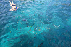 Snorkeling in transparent tropical sea Royalty Free Stock Photography