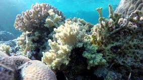 Snorkeling, Tropical fish. stock video