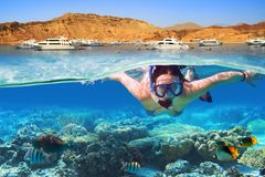 Snorkeling in the tropical water of Red Sea. Young woman at snorkeling in the tropical water of Red Sea in Egypt Stock Photography