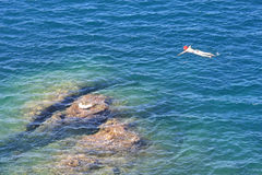 Snorkeling in the Tyrrenian Sea near Talamone, Italy Royalty Free Stock Image