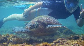 Free Snorkeling Woman And Sea Turtle. Tourist Activity Snorkeling With Turtles. Marine Tortoise Underwater Photo Royalty Free Stock Photo - 138111635