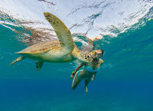 Snorkeling woman with hawksbill turtle, underwater photography. Travel lifestyle, water sport outdoor activities, swimming and snorkeling on summer beach Royalty Free Stock Photography