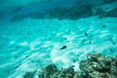 Snorkeling the Yejele Beach Reef. TADINE,MARE,NEW CALEDONIA-DECEMBER 3,2016: Blue devil damselfish, dusky surgeonfish, and tourists snorkelling in the beautiful royalty free stock images