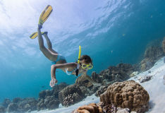 Snorkeling. Young lady snorkeling over coral reefs in a tropical sea Stock Image