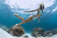 Snorkeling Royalty Free Stock Photography