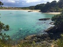 Snorkeller en la bahía de Matai cerca de Mangonui, tierra del norte, Nueva Zelanda Fotografía de archivo libre de regalías