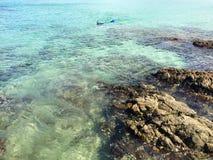 Snorkeller i den Matai fjärden nära Mangonui, norra delen av ett land, Nya Zeeland royaltyfria bilder