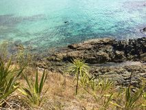 Snorkeller in Matai Bay near Mangonui, Northland, New Zealand. Looking down at the turquoise-blue waters of Matai Bay, a popular park and campsite on the stock image