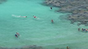 Snorkellers in the coral reefs of Hanauma Bay, Oahu, Hawaii. School of snorkellers exploring the blue and emerald green ocean waters among the coral reefs of stock video footage