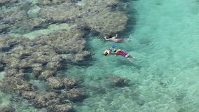 Snorkellers in the coral reefs of Hanauma Bay, Oahu, Hawaii. School of snorkellers exploring the blue and emerald green ocean waters among the coral reefs of stock video