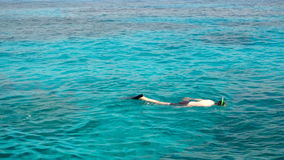 Snorkelling in the clear turquoise water stock footage