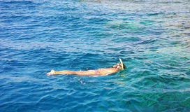 Snorkelling in the Red Sea. Girl snorkeling, enjoying the coral in the Red Sea royalty free stock photography