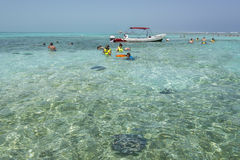 Snorkelling and stingrays Belize Stock Image