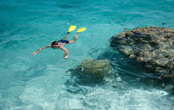 Snorkelling - Tropical Vacation