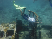 Snorkelling the Tug Boat Stock Images