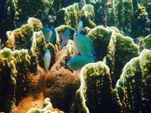 Snorkelling w Borneo Fotografia Royalty Free