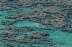 Snorkla den Hanauma fjärden, Hawaii royaltyfria bilder