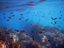 Snorkla för Laguna Beach arkivfoto