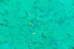 Snorkla i det öppna havet Royaltyfria Foton