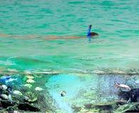 Snorkla i det öppna havet Royaltyfria Bilder